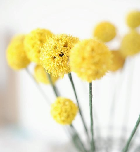 Sweet-yellow-flowers-in-jar