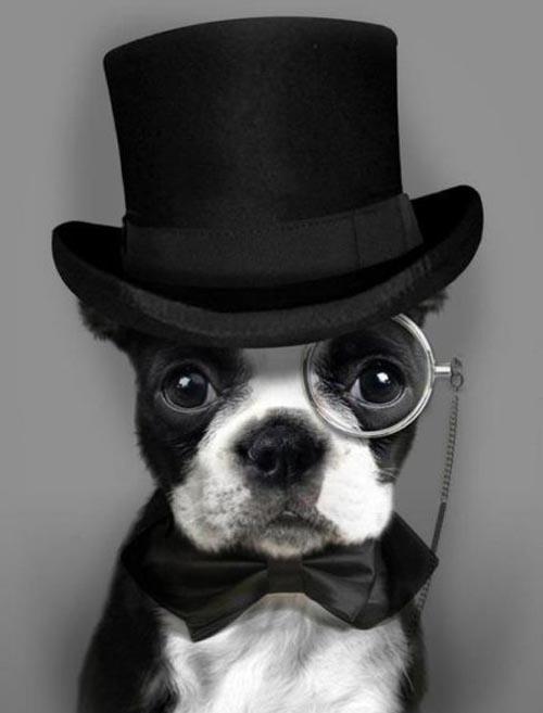 a-posh-dog