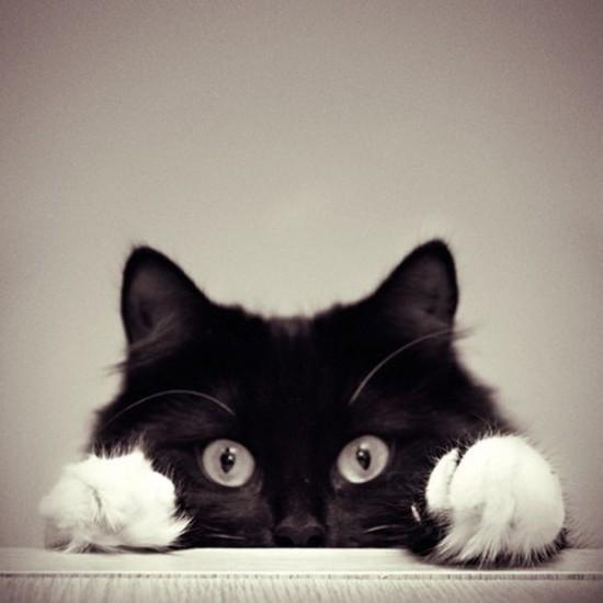 black-and-white-cute-pets-photography-Favim.com-528213