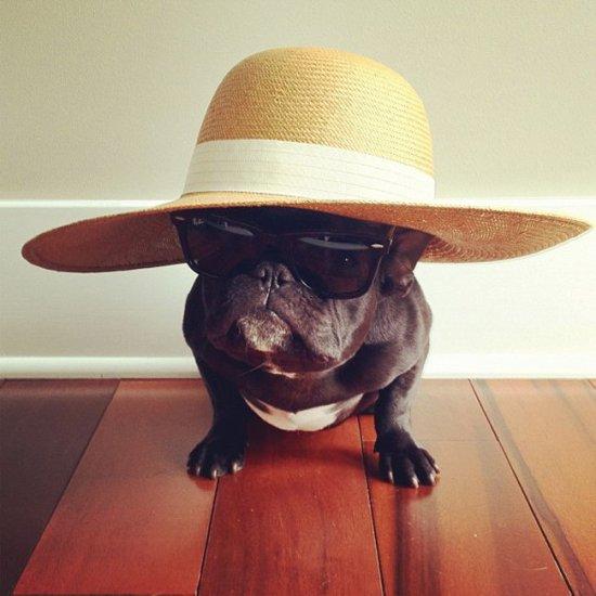 Funny-French-Bulldog-Trotte-photo-by-its-owner-Sonya-Yu-01