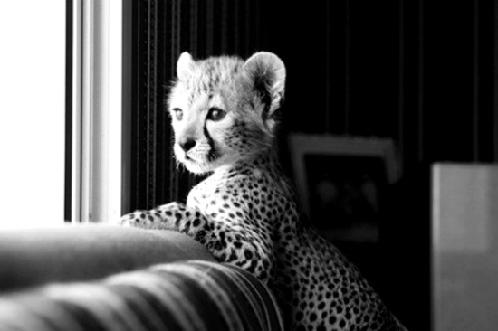 animal-black-and-white-cute-kind-kindly-Favim.com-452465