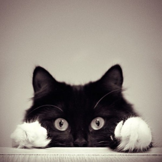 black-and-white-cute-pets-photography-Favim.com-528213